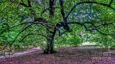 The Old Tree At Frelinghuysen Arboretum Art Print