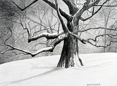The Old Tree Print by Bob Crawford