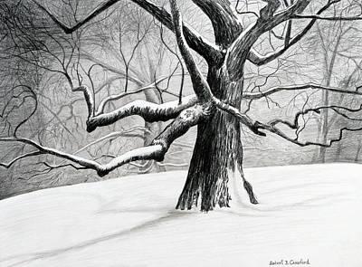The Old Tree Original