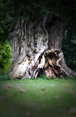 Photograph - The Old Tree  by Cathy Beharriell
