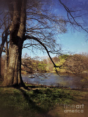 Photograph - The Old Tree - Central Park Lake In Spring by Miriam Danar
