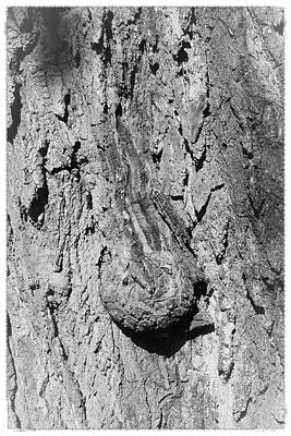Photograph - The Old Tree by Mario MJ Perron