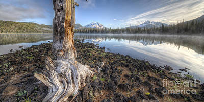 Bend Oregon Photograph - The Old Tree Trunk by Twenty Two North Photography