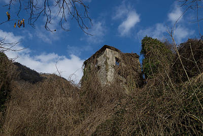 Photograph - The Old Trees Of The Forest Enveloping The House by Enrico Pelos