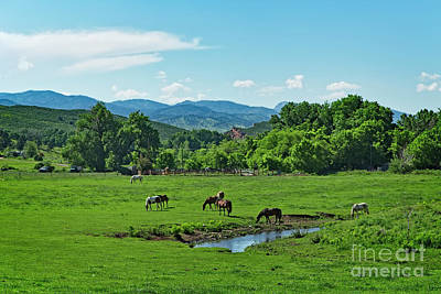 Photograph - The Old Water Hole by Jon Burch Photography