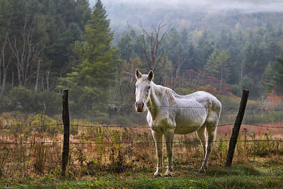 Photograph - The Olde Gray Horse by Ken Barrett