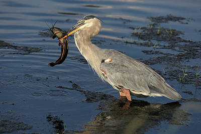 Catfish Photograph - The One That Did Not Get Away by Donna Kennedy