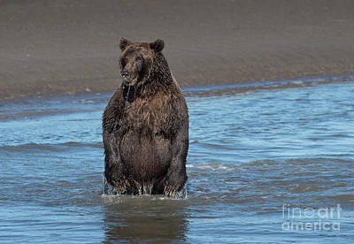Photograph - The One That Got Away - Alaska by Sandra Bronstein