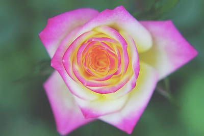 Photograph - The One That You Love by Laurie Search