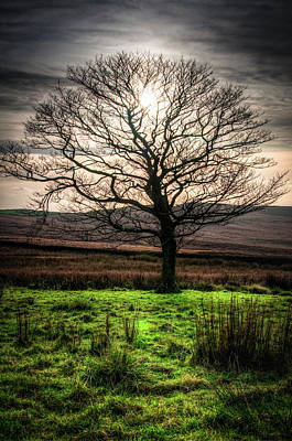 Photograph - The One Tree by Geoff Smith