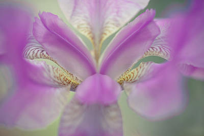 Photograph - The Open Heart Of Iris. Purple by Jenny Rainbow