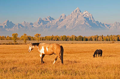 Photograph - The Open Range by Gary Lengyel