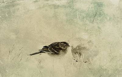 Photograph - The Orange And Sparrow by Sue McGlothlin