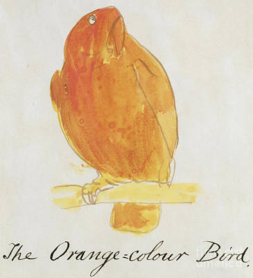 Cute Cartoon Painting - The Orange Color Bird by Edward Lear