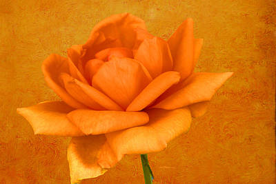Manipulation Photograph - The Orange Rose by EricaMaxine  Price