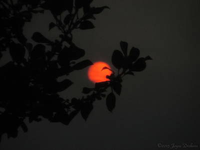 Photograph - The Orange Sun Sets by Joyce Dickens