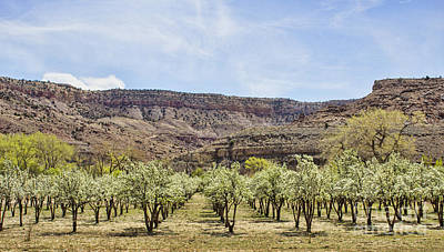 Photograph - The Orchard by Steven Parker