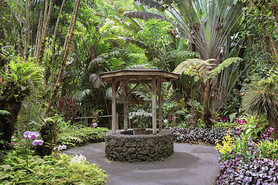 Photograph - The Orchid Garden by Susan Rissi Tregoning