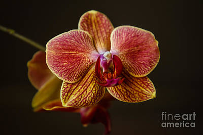 Nature Poster Photograph - The Orchid by Robert Bales