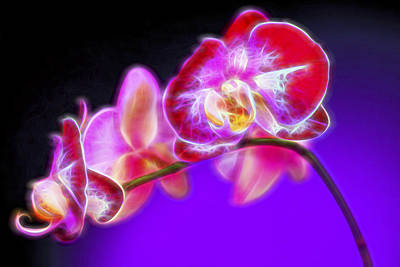 Macro Digital Art - The Orchid Watches II by Jon Glaser