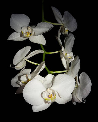 Photograph - The Orchids by Ernie Echols
