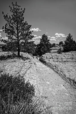 Photograph - The Oregon Trail by Jon Burch Photography