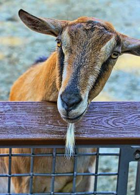 Photograph - The Original Goatee by Allen Beatty