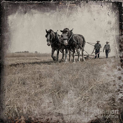 Photograph - The Original Horsepower by Brad Allen Fine Art