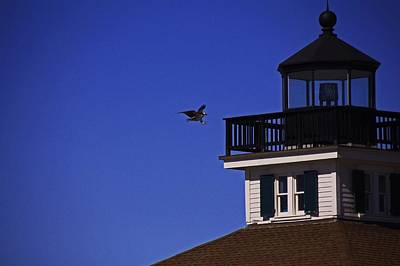 Photograph - The Osprey And The Lighthouse I by Michiale Schneider