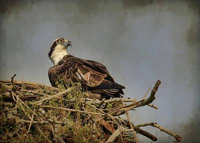 Photograph - The Osprey Nest by Steve McKinzie