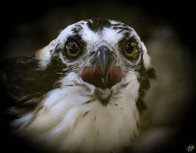 Animals Photos - The Osprey, No. 14 by Elie Wolf