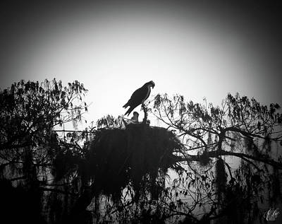 Photograph - The Osprey, No. 15 by Elie Wolf