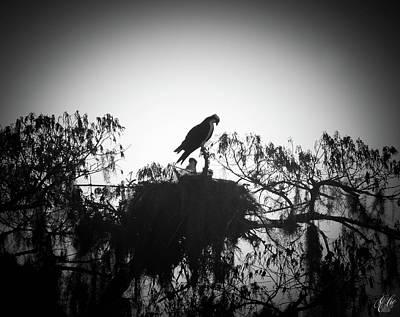 Animals Photos - The Osprey, No. 15 by Elie Wolf