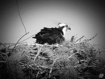 Animals Photos - The Osprey, No. 17 by Elie Wolf