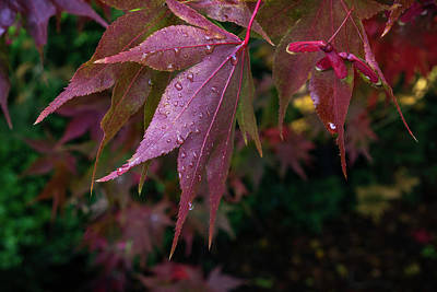 Photograph - The Other Side Of Maple by Ken Stanback