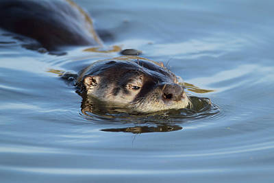 Photograph - The Otter by Craig Strand
