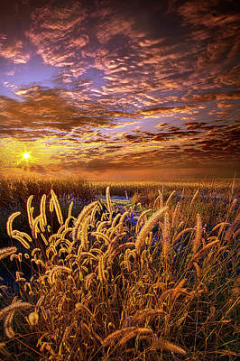 Photograph - The Outer Fringes by Phil Koch