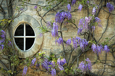 Floribunda Photograph - The Oval Window by Tim Gainey
