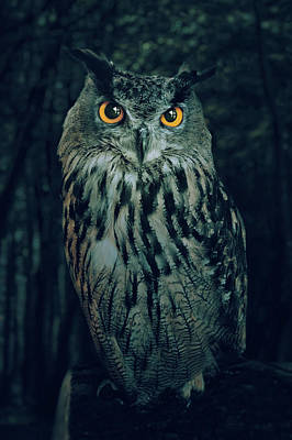 Falconry Photograph - The Owl by Carlos Caetano