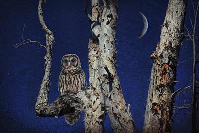 Night Owl Mixed Media - The Owl by Edelberto Cabrera