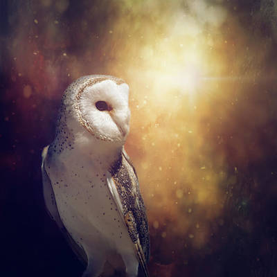 Manipulation Photograph - The Owl by Margaret Goodwin
