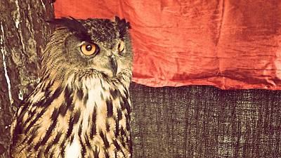 The Owl Art Print by Pedro Venancio