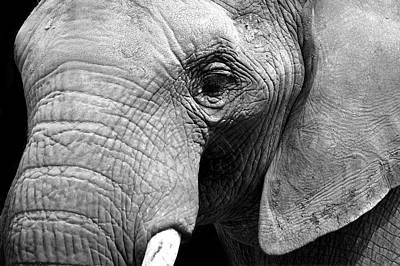 Pachyderm Photograph - The Pachyderm by Mark Rogan