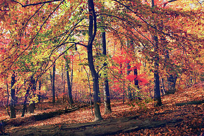 Photograph - The Painted Forest by Jessica Jenney