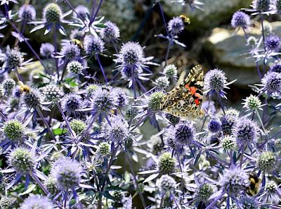 Photograph - The Painted Lady by Corinne Rhode