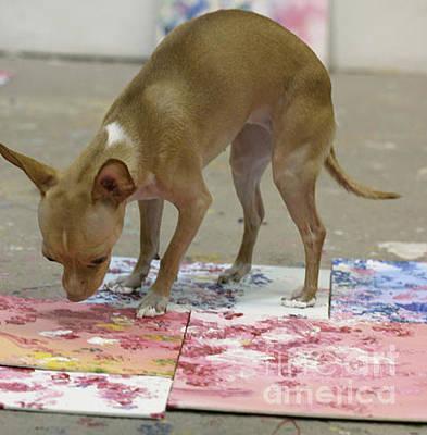 Dog Art Photograph - The Painting Chihuahua by Antony Galbraith