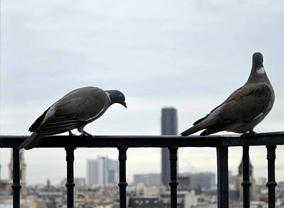 Paris Skyline Royalty-Free and Rights-Managed Images - The Pair of Them by Marla McPherson