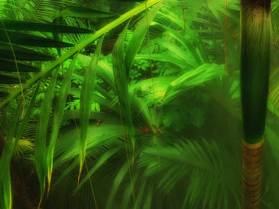 Photograph - The Palm Forest  by Connie Handscomb