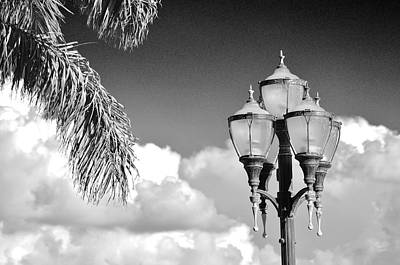 Fort Pierce Marina Photograph - The Palm Fronds And The Lamp Post by Don Youngclaus