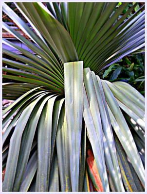 Sun Rays Digital Art - The Palm by Mindy Newman